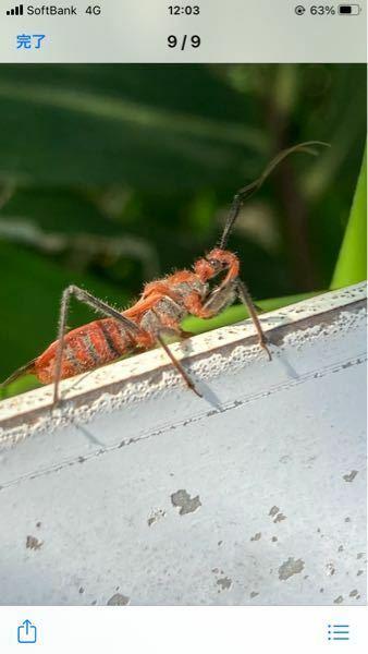 今日このような虫を見つけたのですか、なんでしょう?わかる方いましたら、教えてください