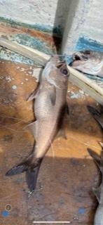 この魚は何という魚ですか?