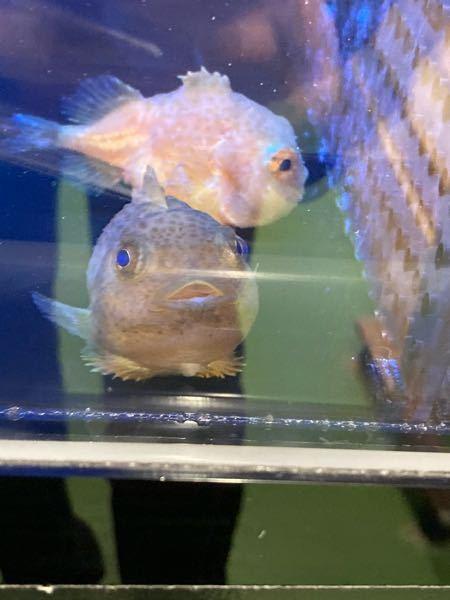 この魚の名前が分かる方いませんか?