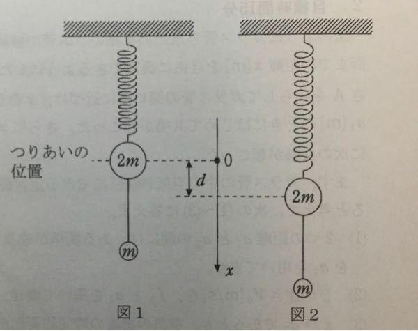 高校物理・単振動の問題です。 重力加速度をg、おもりは鉛直方向にのみ運動する。ばねと糸の質量、糸の伸び、空気抵抗は無視できるものとする。 以下の図のような質量の異なる2つのおもり(質量はmと2mである)がある。 はじめ図1のように、糸で繋がれて、ばね定数kのばねにつるされ、つりあいの位置で静止状態にある。 次に図2のように、2つのおもりを鉛直下向きに距離dだけ下げて、時刻t=0で放し、鉛直...