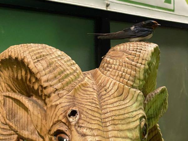 パーキングエリアで、ツバメが巣作りをしても 糞害の問題で巣を壊されますよね? その時は場所を...