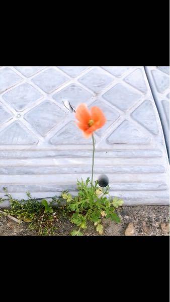 このお花の名前分かる方いらっしゃいますか?