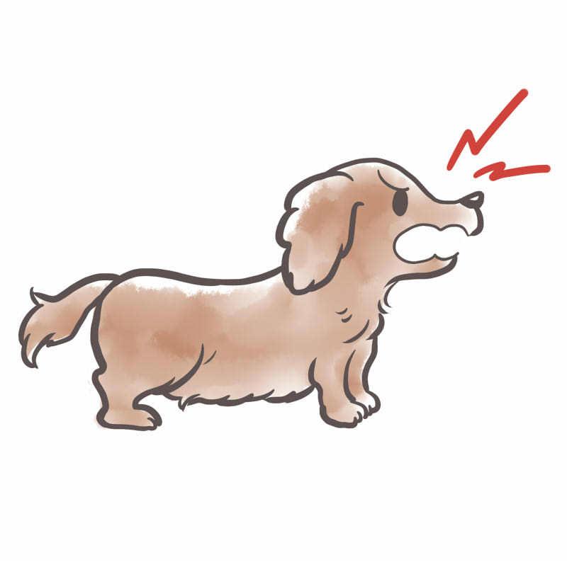 隣の犬の痴呆犬の吠え!吠え!!について質問です。 うちは一軒家ですが隣との隙間が50センチ位しかないので隣のミニチュアダックスが1分で40回ペースで、1日8時間くらい吠えてます。 暖かくなりお...