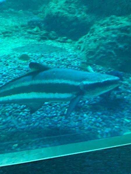 この魚はなんと言う名前ですか?