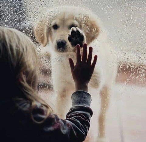 別れだと思いますか? 再会だと思いますか? 貴方は、どっちに見えますか?
