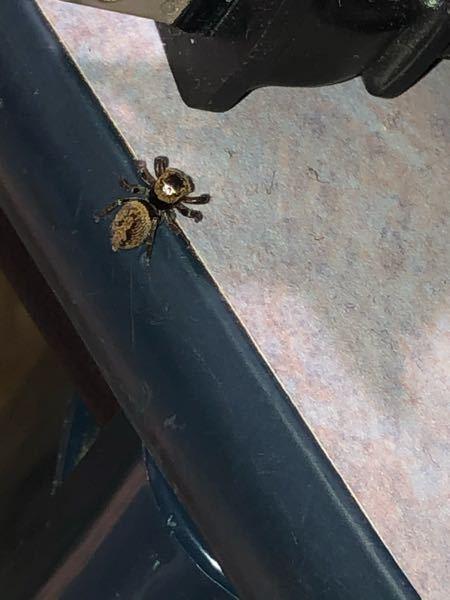 この蜘蛛の種類は何ですか?