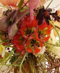こちらの赤い花の名前を知りたいです