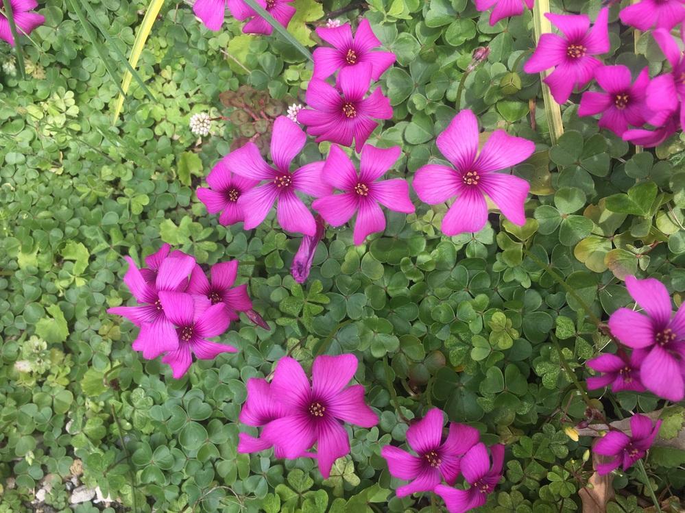 庭にいっぱい咲いてます。なんの花ですか?