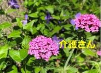 こちらの花の名前は何ですか? 撮影場所は兵庫県で撮影日は2021年4月25日です。 よろしくお願いします。