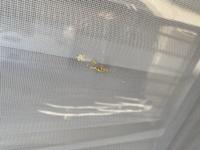 助けてください。 昼間、洗濯物を取り込もうとしたらベランダの洋服数枚と写真のように網戸へかけて黄色い付着物が付いてました。 ベランダの床にはおよそ10円玉のサイズが7〜8箇所あり、すぐに洗い流しました...