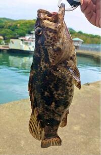 魚の種類  写真の魚について 種類が分かる方、ご教示ください。  本日福岡県の海で釣ったものです。 タケノコメバルでしょうか。