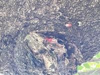 この虫何か教えてください!!真ん中の赤いやつです