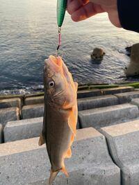 何という魚ですか?