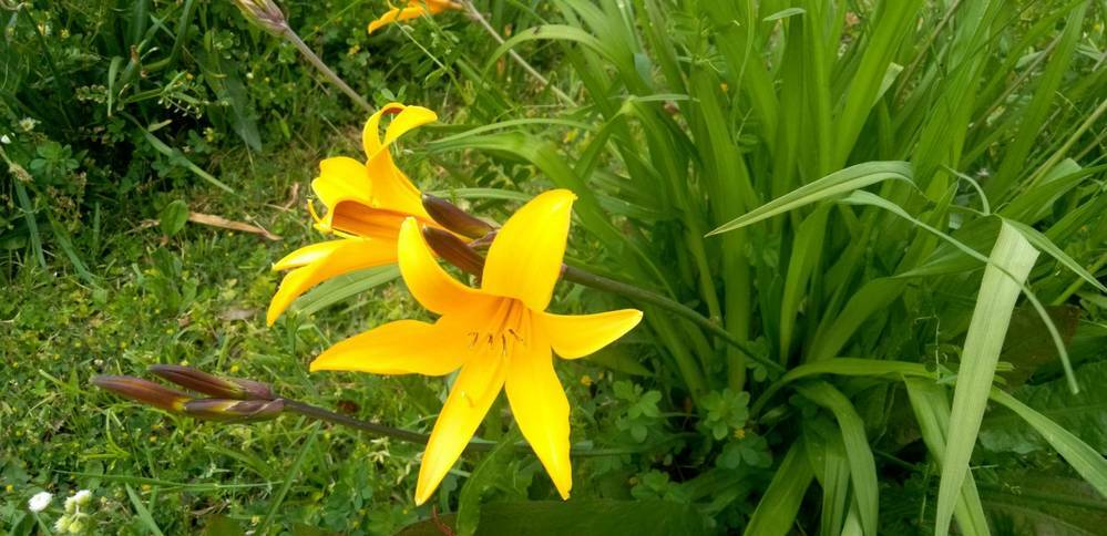 この黄色の花の名前を教えてください。よろしくお願いします。