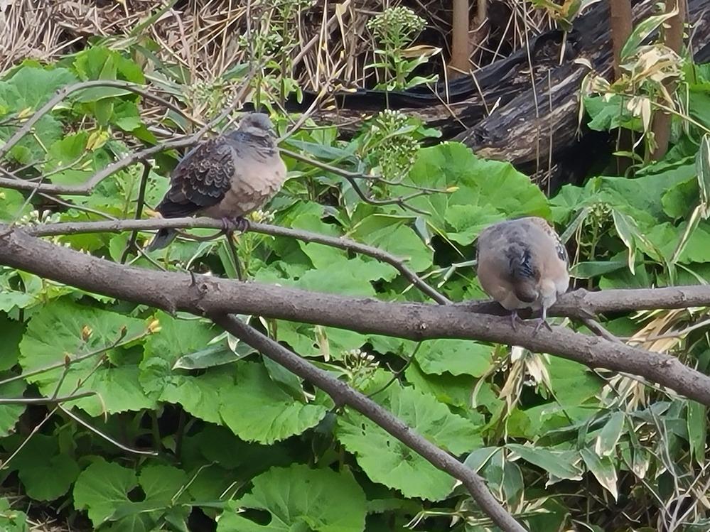 この鳥何て言う鳥ですか?