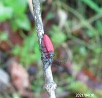 虫の名前を教えてください、 岐阜県美濃加茂市で、 撮影20210430