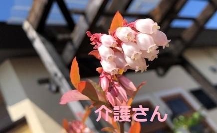 この花の名前は何ですか? 撮影場所は兵庫県で撮影日時は2021年4月10日です。 よろしくお願いします。