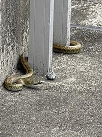 お家に蛇が出ました。 この蛇は悪い蛇なのでしょうか?