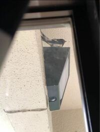 玄関の外に鳥がつがいでピーチクパーチク偵察に来ていました。 巣を作ろうとしているのだと思いますが、なんの鳥なのかわかりません。 逃げないようこっそり撮影したので角度が下からなのですが、どなたかわかる方お願い致します!