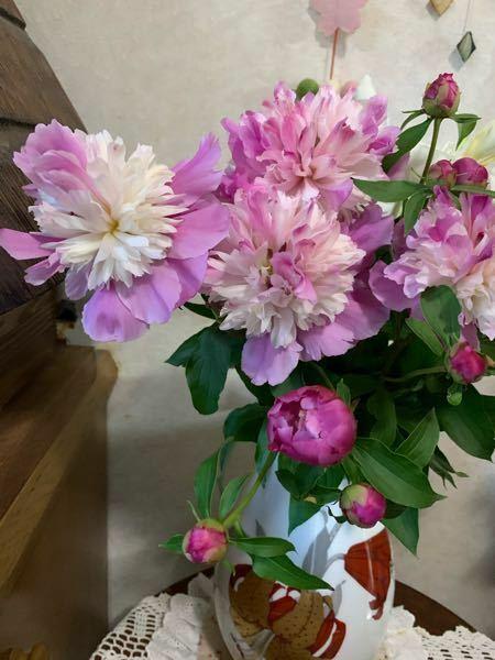 このお花の名前教えて下さい!実家にありとっても綺麗で心を奪われました。