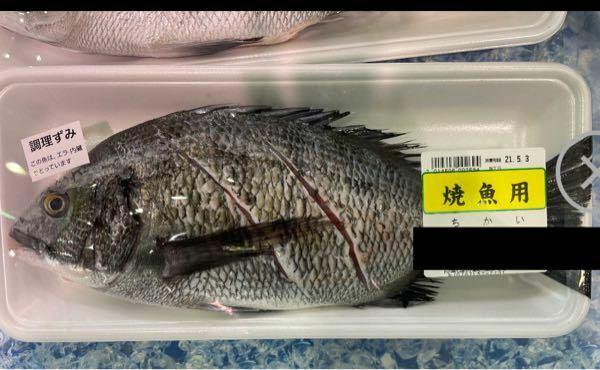 ちかい この魚の真の名前は何でしょうか?