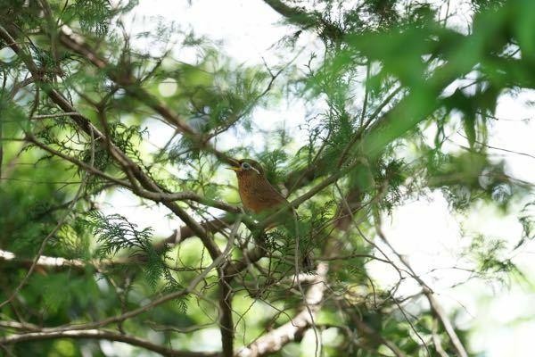 たまたま撮った野鳥です。 なんて名前でしょうか?