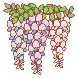 藤の花といったら何色をイメージしますか?