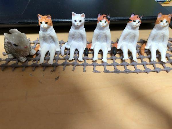 この猫ちゃんたちは、何シリーズでしょうか?