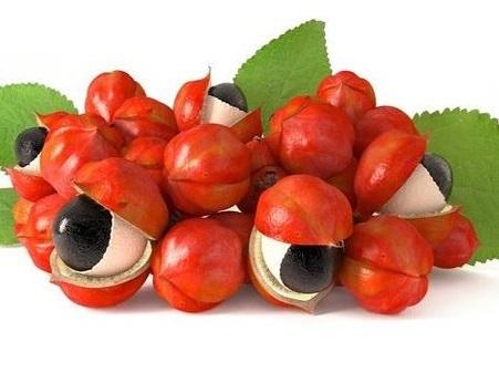 ガラケーを使いながらガラナの実を食べれば カフェインやタンニンが摂取できて 疲労回復や滋養強壮に役立ちますか??