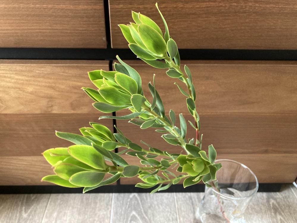 この切り花の名前を教えてください。