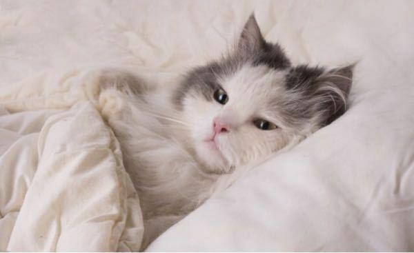 猫はオネショしないのですか? - 飼い主のベッドに入り込み、添い寝する可愛い子。 起きたらオシッコしてた…なんてことはないのですか?