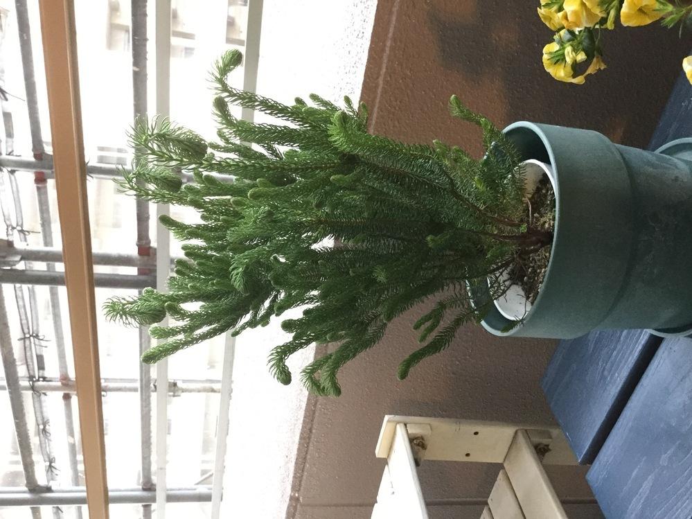 この植物の名前を教えてください。。 頭が垂れてきて元気にしてあげたいんです。 よろしくお願いします。