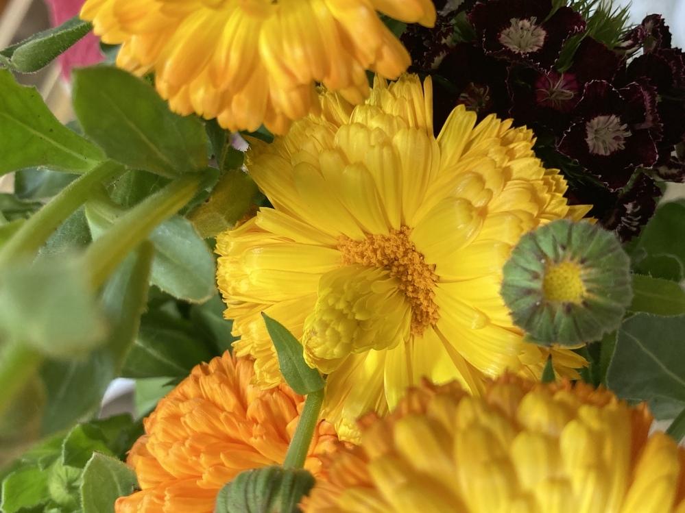 花から花が咲こうとしているのですが、突然変異なのでしょうか? 野菜直売所で買った花を飾っていたら、花から花芽のようなものが出てきました。 初めてみたのですが、何か理由があるのでしょうか?