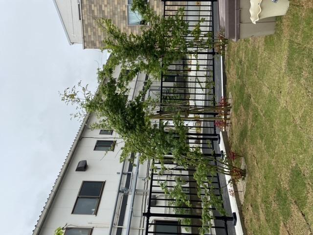 庭の植物について質問です。 木が傾いてしまい、竹で支えて紐で縛ればいいんでしょうか? ネットを見ましたがあまりよくわからないので、こちらで聞いてみました。 よろしくお願いします。