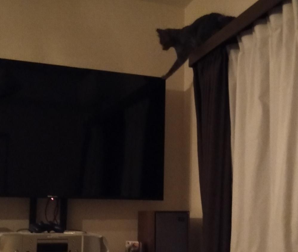 何故、猫ちゃんはモニターやテレビに乗ろうとするのですか? 遺伝子レベルですか? ※家の猫はブラウン管モニターもアナログテレビも知りません。