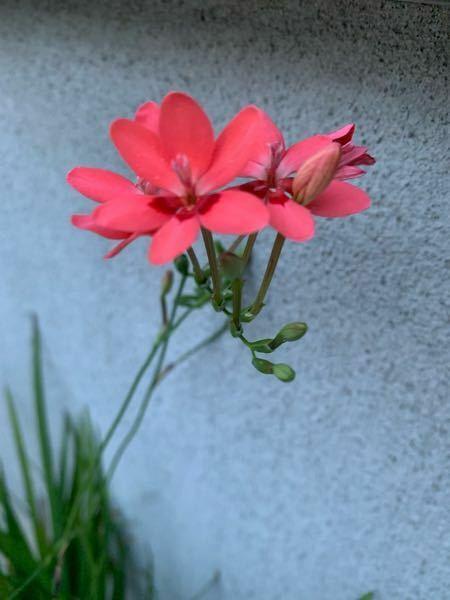 この花はなんと言う名前ですか?