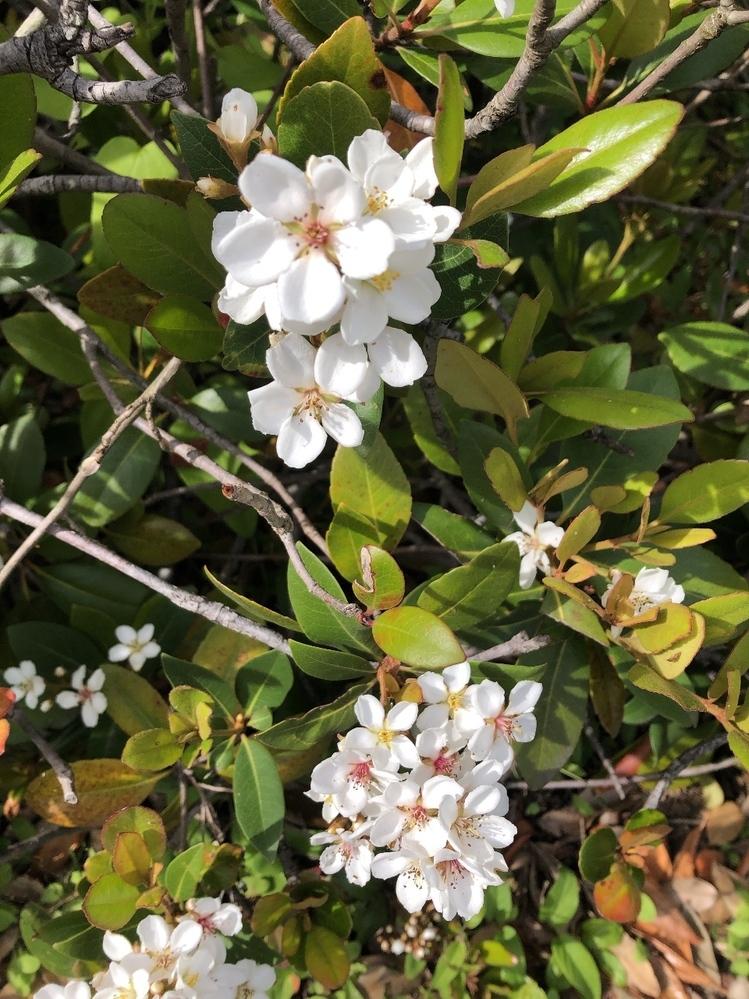 この花の名前教えてください よろしくお願いいたします