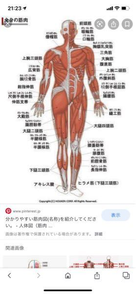 走ると太ももの付け根の少ししたがとても痛いです。 走らなければ痛くないのですが、部活で短距離をやっているので走ることしかないです、 これって軽い肉離れですか? あと治す方法が知りたいです