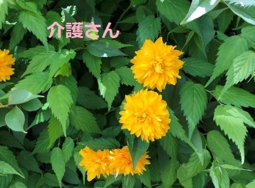 この植物の名前は何ですか? 撮影日時は2021年4月16日 撮影場所は兵庫県です。