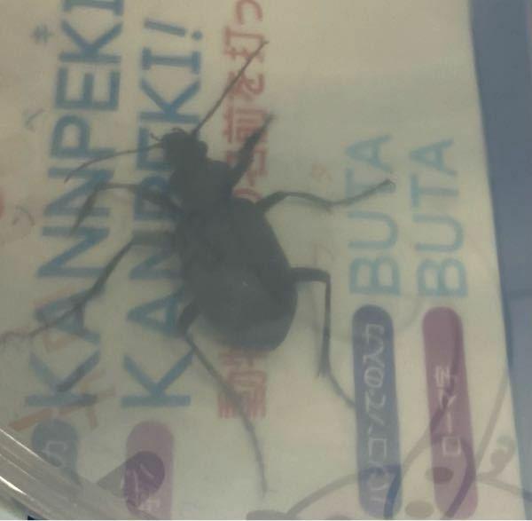 今日家に現れたのですが、この虫の名前わかる方いらっしゃいますか?