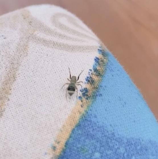 この蜘蛛はなんて名前の蜘蛛ですか? 初めて見た蜘蛛なので...