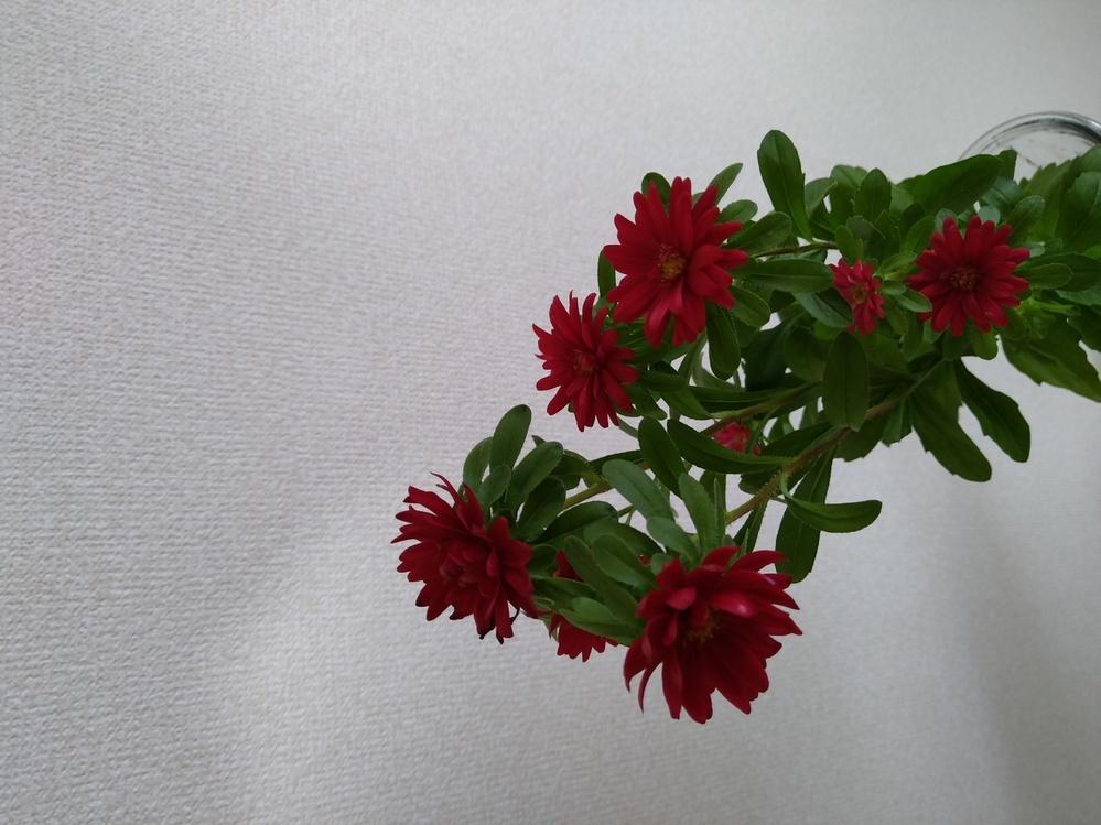 この花の名前教えてください。 お願い致します。
