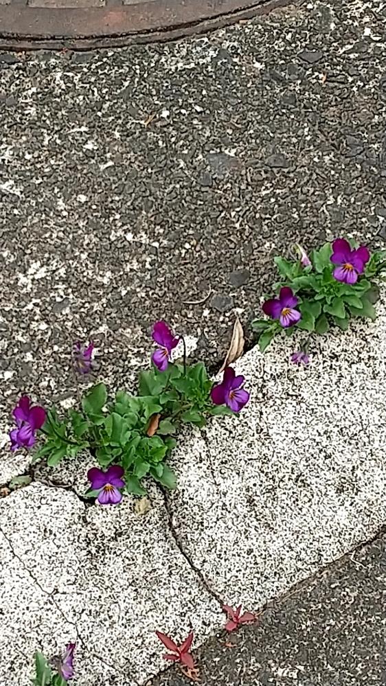 この花はなんでしょうか? 丈夫そうだし可愛いなと思います! 育てやすいのでしょうか?