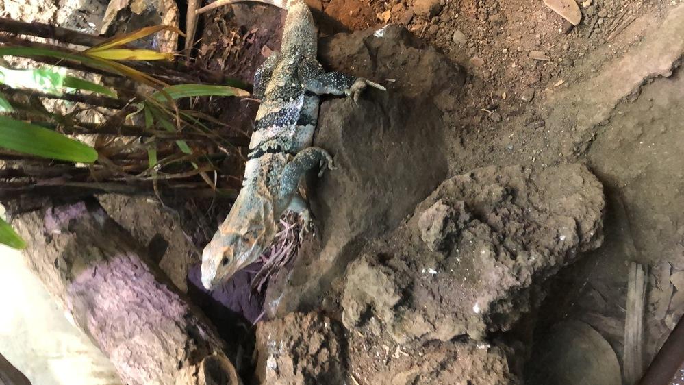 この爬虫類はなんて種類ですか?
