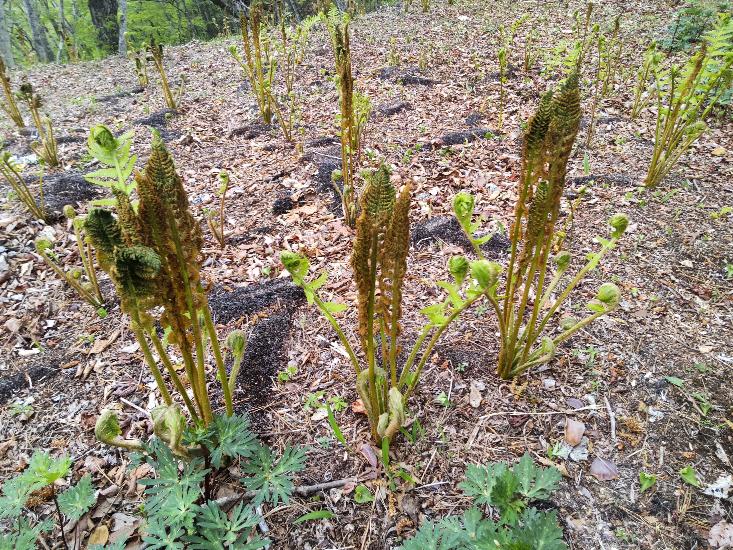 これはなんの植物ですか。山梨の里山です。
