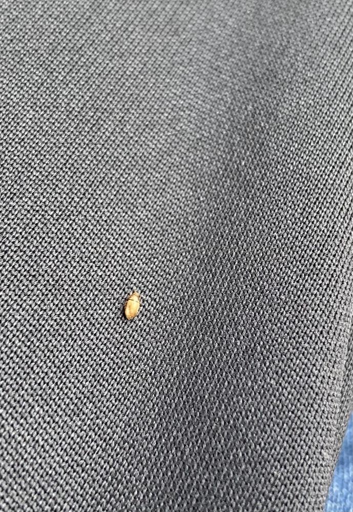 外で遊んでいたら服に虫が付いていました この虫は大丈夫…な虫ですか?