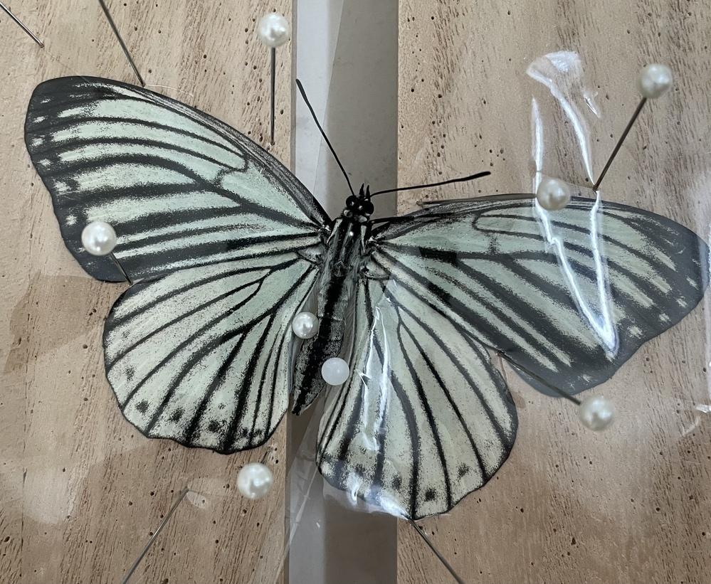 この蝶々のお名前を教えてください!