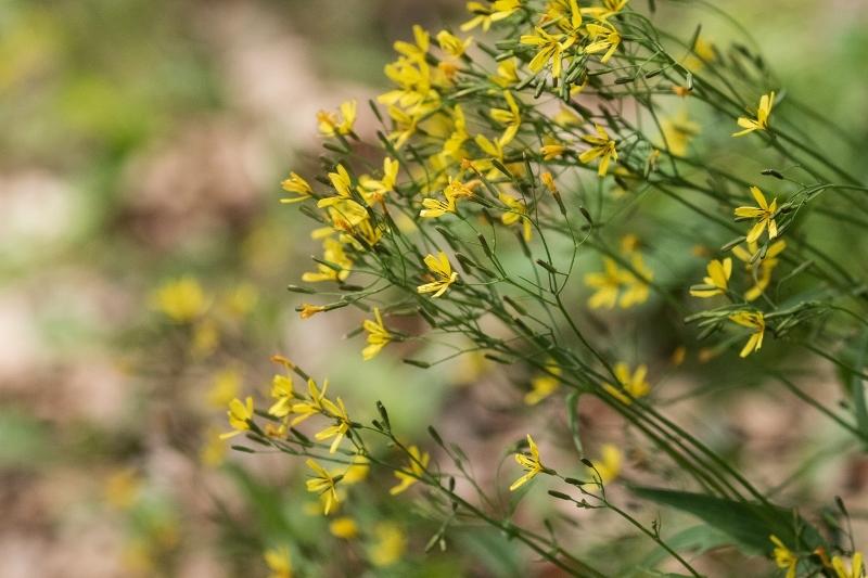 低い山、道端に草丈20㎝位、この小さな花の名前が判りません。 ご存じの方、教えて下さい。
