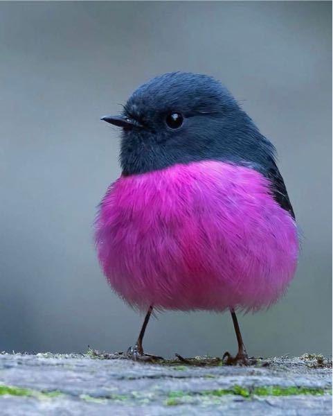 実際にいる鳥でしょうか? 何という鳥ですか?