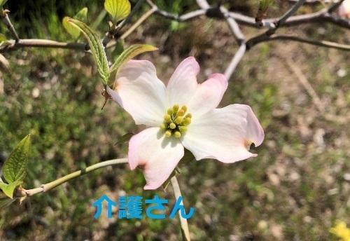 この花の名前は何ですか? 撮影日時は2021年4月19日 撮影場所は兵庫県です。